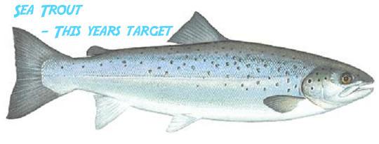 sea-trout-sewin-copy.-AST